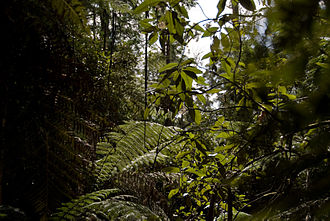 Forests of Australia - Image: Brown Mountain 08 Pengo