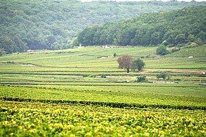 The French wine region of the Cote d'Or.
