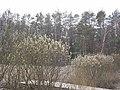 Byłem na Wilczych Ługach małymi krokami idzie wiosna 18 - panoramio.jpg