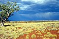 CSIRO ScienceImage 1446 Spinifex Plain.jpg