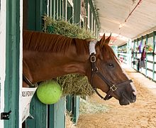 A reddish-brown horse sticking his head and neck out of a stall