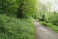 Calstock, path near Cothele Quay - geograph.org.uk - 1871612.jpg