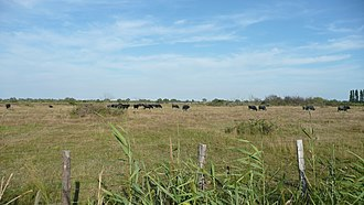 Manade - Camargue cattle must be grown in manade style to merit AOC-label.
