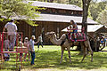 Camel rides, Drake Day Circus at Drake Well Park, August 24, 2013.jpg
