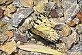 Camouflage II (34741623901).jpg