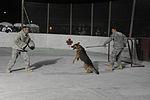 Canine Attack Capabilities Demonstration DVIDS235469.jpg