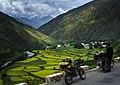 Canola fields, Motorbike Trip Tibet (11622439804).jpg