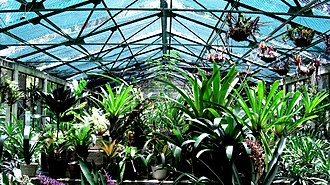 Caracas Botanical Garden - Image: Caracas Jardín Botánico