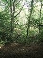 Carrdale Woodland - geograph.org.uk - 1467727.jpg