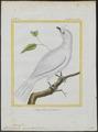 Casmarhynchus niveus - 1700-1880 - Print - Iconographia Zoologica - Special Collections University of Amsterdam - UBA01 IZ16600171.tif