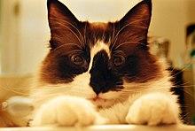 Cat looking into camera.jpg