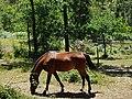Cavalos nos Jardins do Parque da Pena em Sintra (36441287914).jpg
