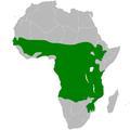 Cecropis senegalensis distribution map.png