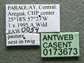 Cephalotes depressus casent0173673 label 1.jpg