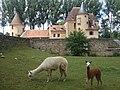 Château d'Anizy et lamas.jpg
