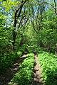 Chahari-Kutkivetski-15056341.jpg