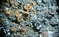 Chalcophanite - Gold Hill Mine, Deep Creek Mts, Utah, USA.jpg