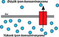 Chemiosmosis1.tr.png