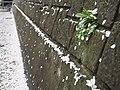 Cherry blossom snow, Gangneung-do.jpg