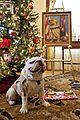 Chesty's Christmas 131216-M-LU710-112.jpg