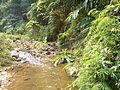 Chiang Rai Province P1110670.JPG