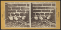 Chicks near brick wall, by Stoddard, Seneca Ray, 1844-1917 , 1844-1917.png