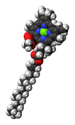 Chlorophyll a - Image: Chlorophyll a 3D spacefill