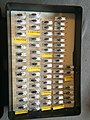 Chrysomelidae collection, Natural History Museum, London 13.jpg