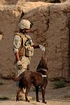 Combat patrol and detainee ops DVIDS295244.jpg