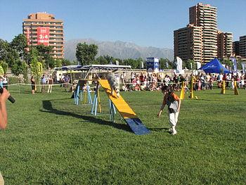 Copa bicentenario 053