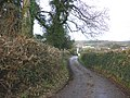 Country lane, south of East Ogwell - geograph.org.uk - 1615669.jpg