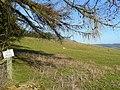 Courtfield Estate land - geograph.org.uk - 1181742.jpg