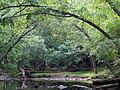 Crabtree Creek Mill Trail Umstead SP 3324 (5893861393) (2).jpg