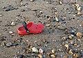 Croc on the beach - geograph.org.uk - 847194.jpg