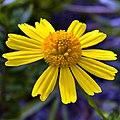 Crystallized Sunshine (5210688695).jpg