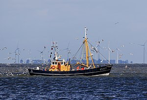 Cuxhaven - A shrimp cutter returns