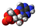 Cyclic-adenosine-monophosphate-anion-3D-spacefill.png