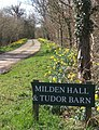 Daffodils at start of driveway to Milden Hall - geograph.org.uk - 724640.jpg