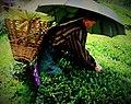 Darjeelingteagardens.jpg