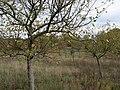 Das Heidefeld Großbeeren on 2019-11-05 36.jpg
