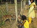 Deer Park at Kinnerasani Dam, Khammam, Telangana State 07.JPG