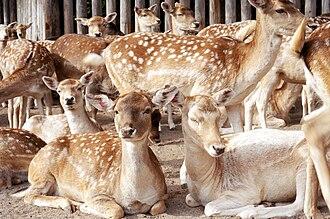 Marineland of Canada - Image: Deer at Marineland