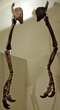 definition of deinocheirus