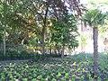 Delft Botanische Tuin.jpg