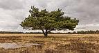 Delleboersterheide – Catspoele Natuurgebied van It Fryske Gea. Omgeving van het heideveld 03.jpg