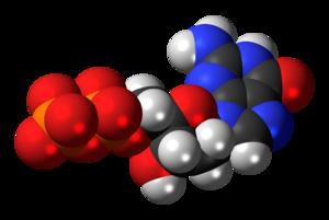 Deoxyguanosine diphosphate - Image: Deoxyguanosine diphosphate anion 3D spacefill