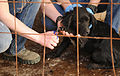 Deployed airmen volunteer at local pet shelter 130210-F-UA873-366.jpg