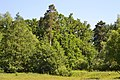 Derno Kivertsivskyi Volynska-Papyky protected tract-view from the field.jpg