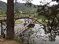 Destroyed bridge in Ranomafana II.jpg