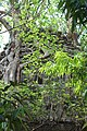 Dilapidated temple of Dalal para in Goghat PS, Hooghly district 15.jpg